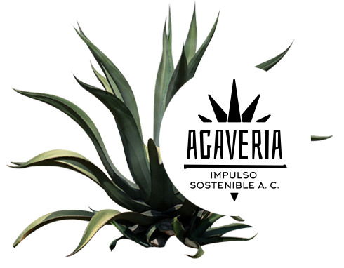 home-image-1-agave